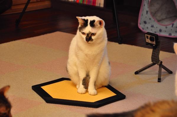 猫転送装置2