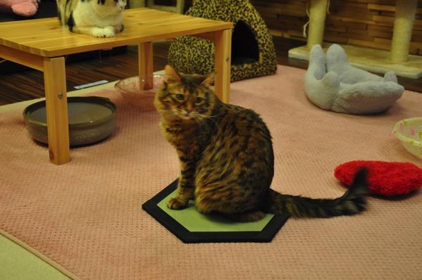 畳と猫ちゃん
