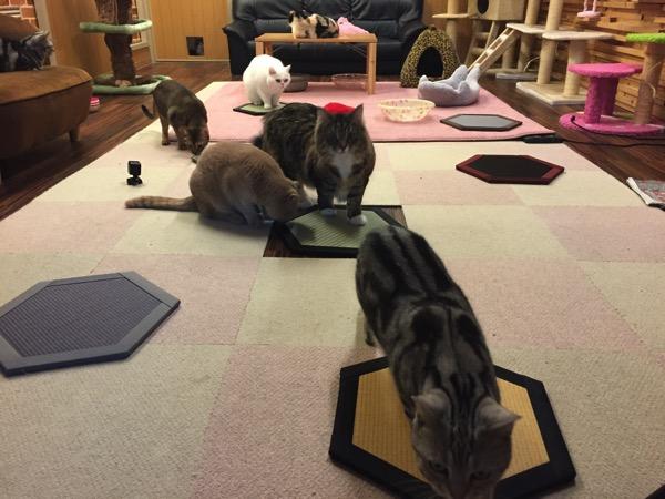 猫と畳がいっぱいです