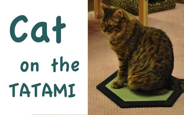 Cat on the tatami